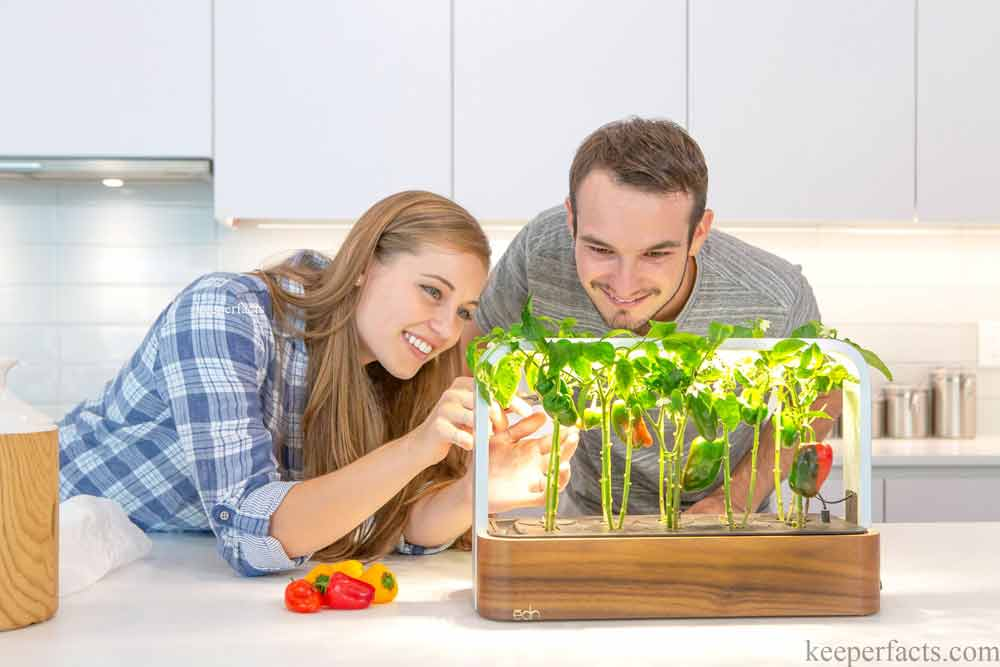Plant together couples